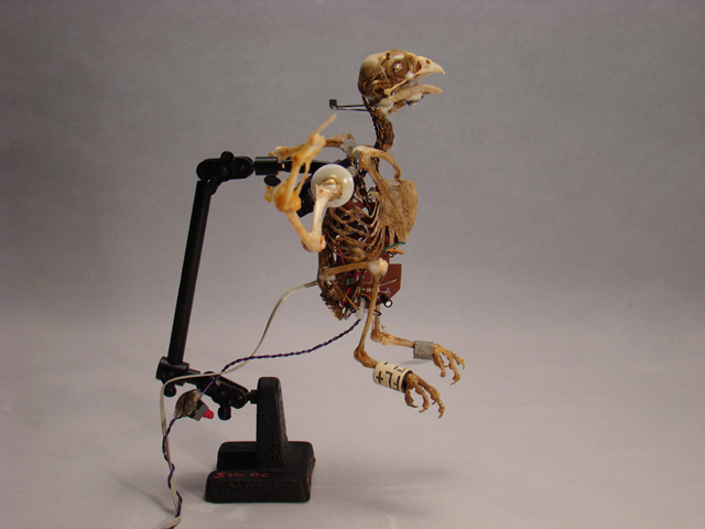 talking robot bird sculpture kinetic art zwanikken